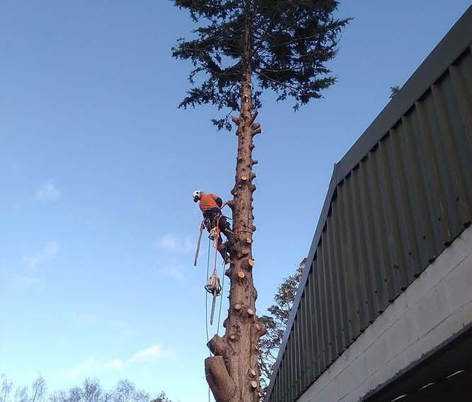 tree-service-hobart