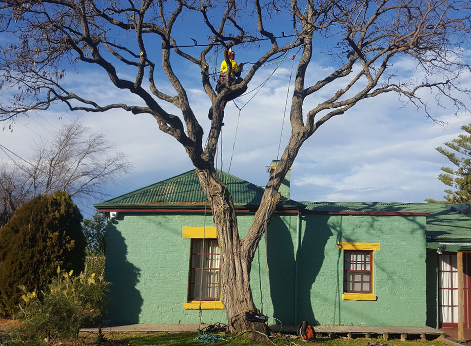 tree-care-provider-hobart