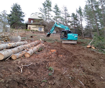 tree-land-clearing