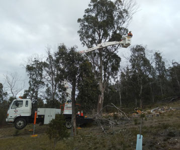 contractor-clearing-land