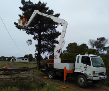 reliable-powerline-clearing-hobart