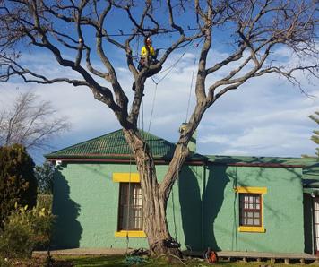 tree-lopping