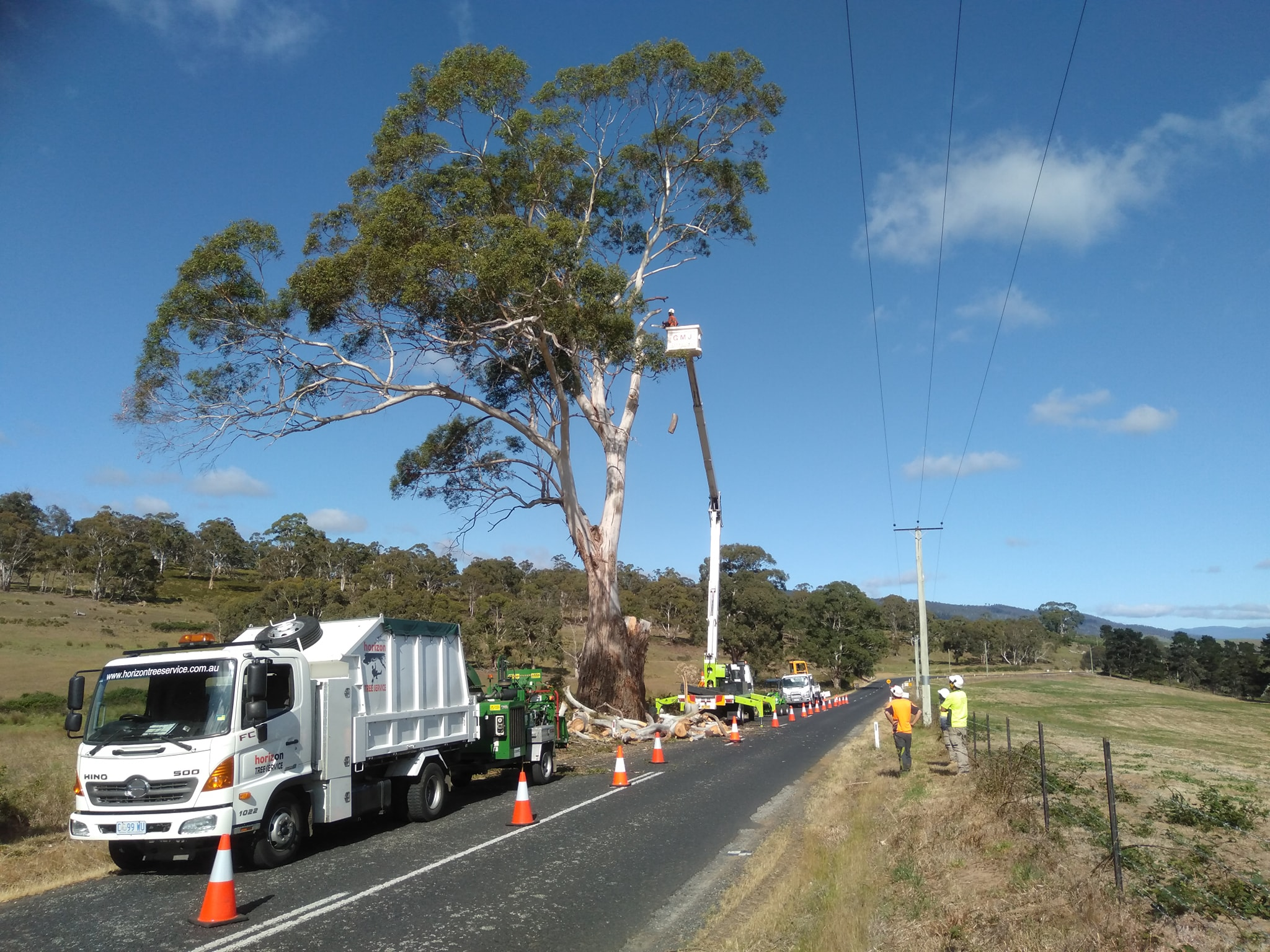 tree-removals-in-hobart