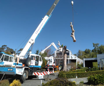 tree-being-removed