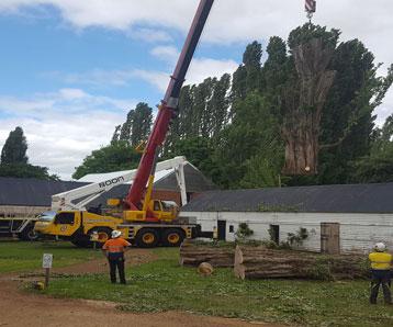 removing-big-tree
