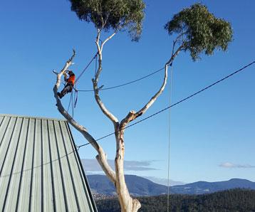 tree-remover