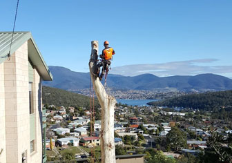 tree-services-hobart