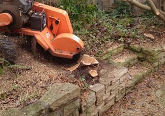 tree-stump-removal