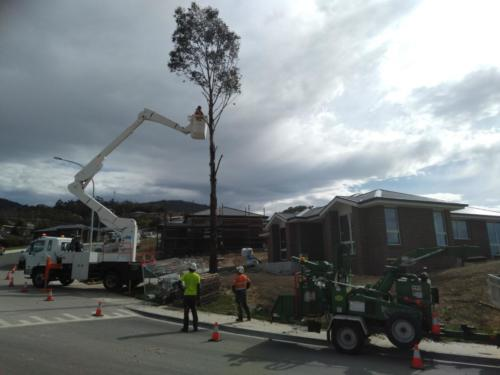 Tree Removals